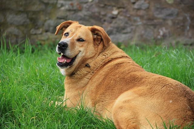 dog-1809044_640